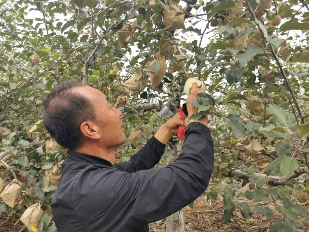 【高质量发展黄河行】因地制宜发展特色农业 延安走出脱贫致富新路子