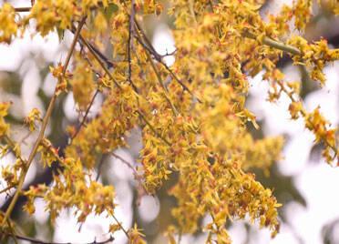 50秒|美拍德州:秋雨清凉秋意浓,花叶飘零层林染