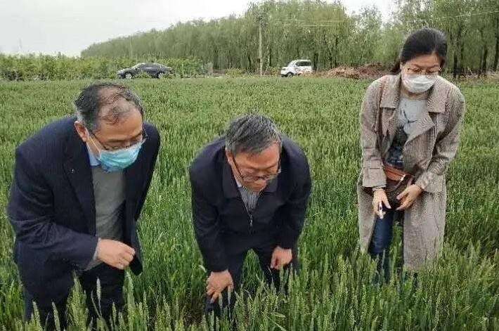 """328万元病虫害防治专项资金到位!潍坊打响农作物病虫害""""歼灭战"""""""