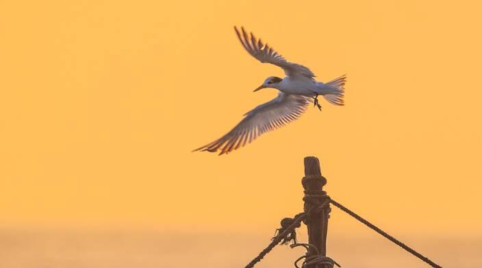 """37秒丨美极了!世界级濒危鸟类""""神话之鸟""""现身日照"""