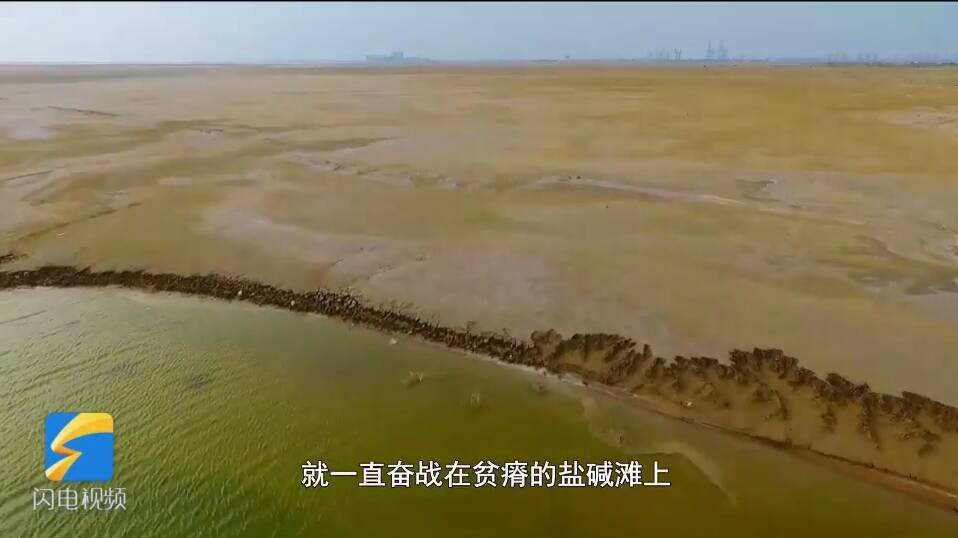 齐鲁最美职工|杨庆山:奋战贫瘠盐碱滩17年,誓把滩涂变绿洲