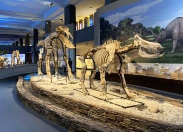 动物王国、博物馆群、黄河湿地……记者带你体验齐河重点文旅项目