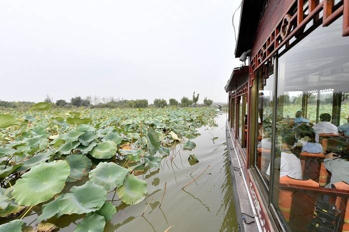 中国梦·黄河情|组图:蓑衣樊,昔日盐碱地今日网红旅游打卡点
