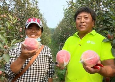 41秒|聊城莘县6000余亩苹果大丰收,不仅有了新品牌,还把苹果送上网