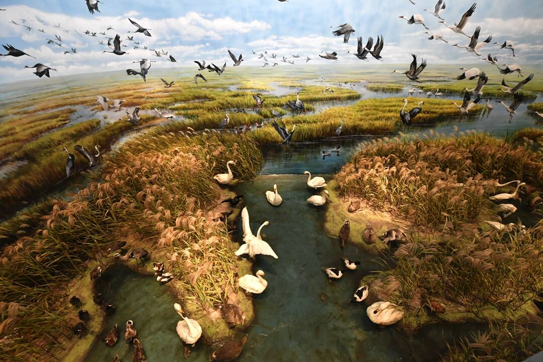 中国梦·黄河情|百鸟齐鸣、河海交汇!这样的湿地保护区你爱了吗?