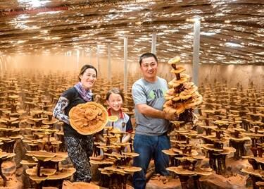 预告!中国(冠县)第三届灵芝文化节25日开幕,有这些精彩内容