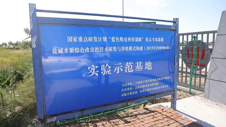 中国梦•黄河情|破局东营大闸蟹产业发展困境:生态和经济都要追求高质量
