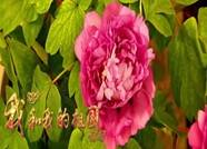 菏泽唱响《我和我的祖国》 庆祝中华人民共和国成立71周年