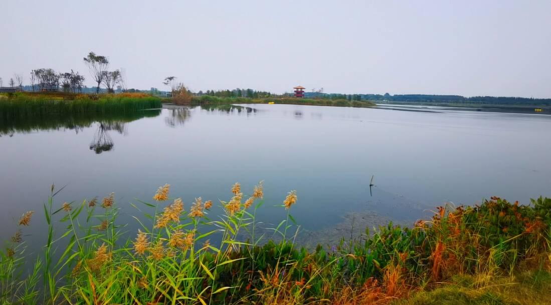"""116秒丨济宁十里湖畔葡萄客 生态红利让他赚得""""盆满钵满"""""""