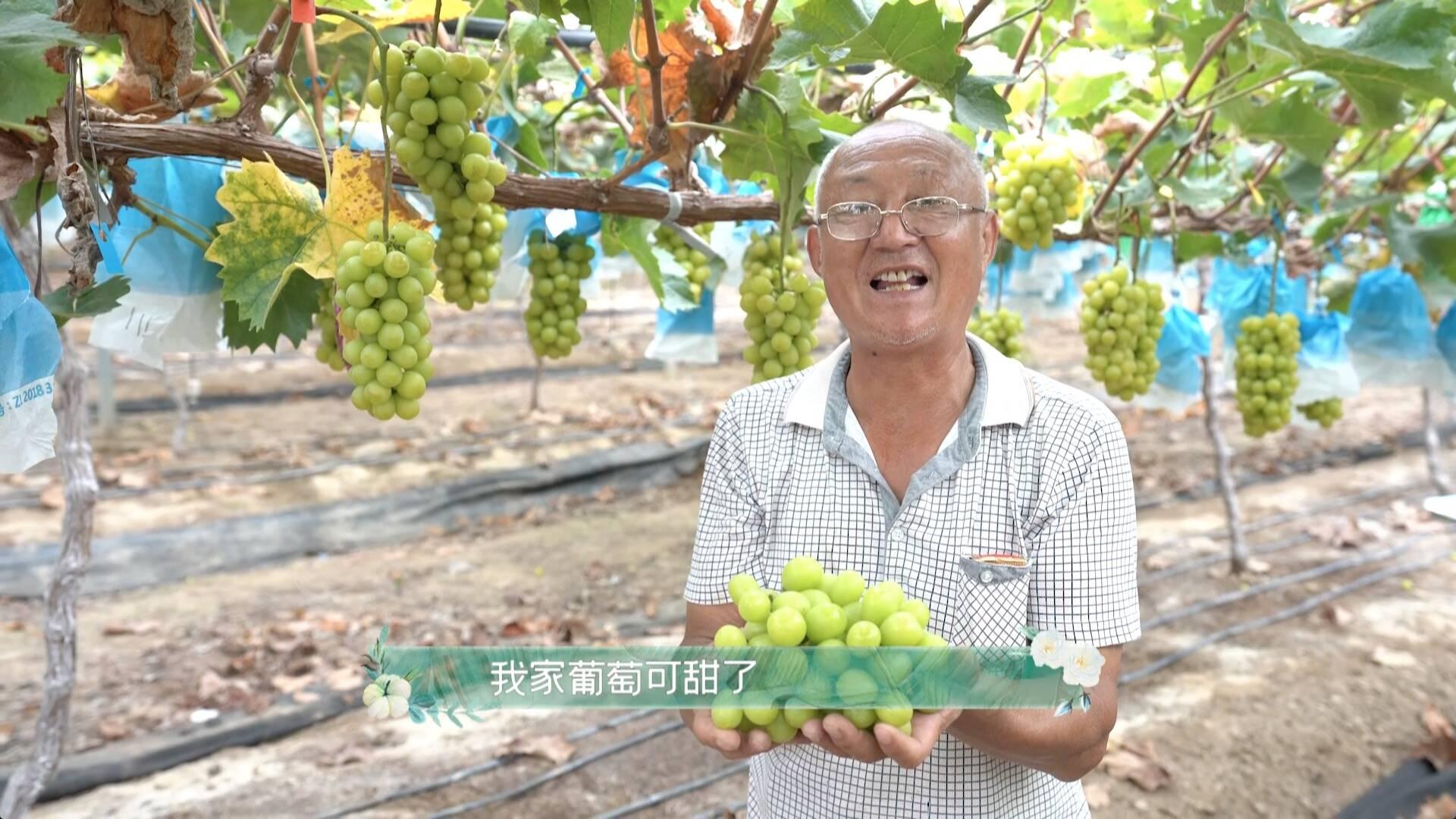 《田園中國》走進洋河新區 歌手賈凡現場為何落淚不止?
