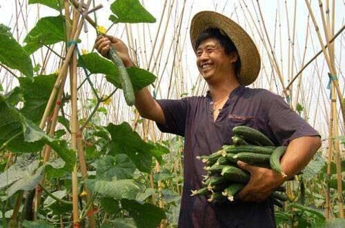 【小康之约】评论:办好农民专业合作社,为乡村振兴赋能