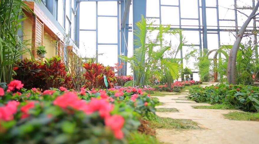 国庆假期寻芳之旅! 美女记者带你打卡鲁南花卉博览园