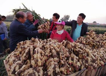 潍坊安丘:两个市场一个标准 努力培育出口农产品新业态