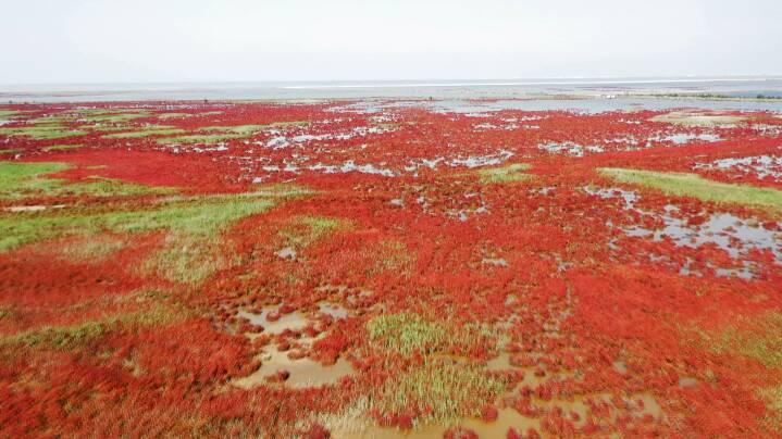 """83秒 黄河三角洲湿地 风光旖旎""""红地毯"""""""