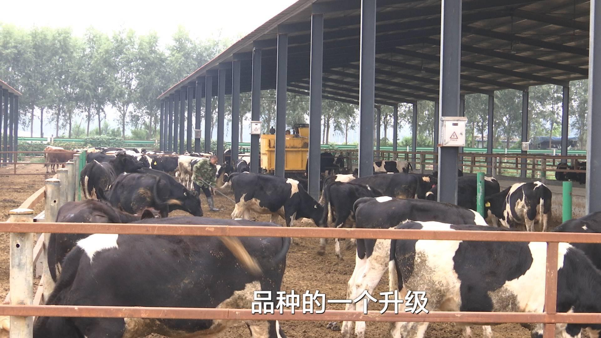"""问政追踪丨聊城""""卡壳""""养殖场顺利开工 两个牛棚已启用"""