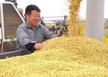 52秒|300余亩大豆喜丰收!聊城这个家庭农场收益近18万元