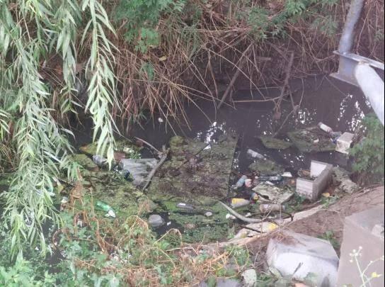聊城:一条臭水沟异味扰民 村民反映多次无果