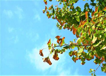 40秒丨德州武城:碧云天黄叶地,多彩秋色别错过