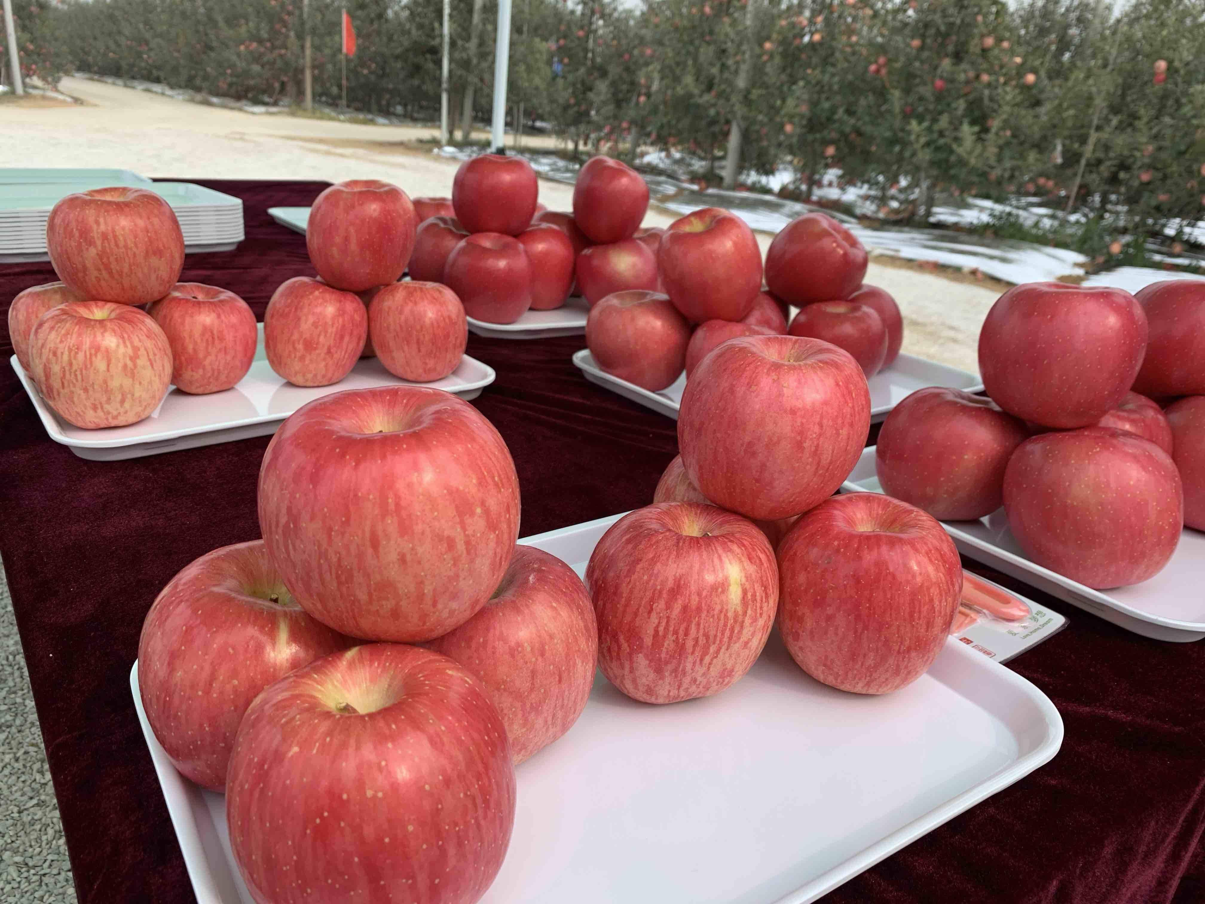 金秋十月相约果都栖霞 和红彤彤的苹果来场约会吧