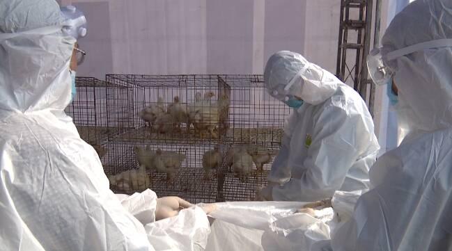 39秒丨多部门联手出击!潍坊市举行突发重大动物疫情应急演练