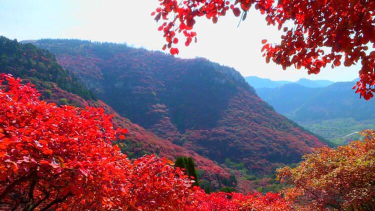 一分钟视频看遍潍坊层林尽染秋意浓 万花落尽红叶烧