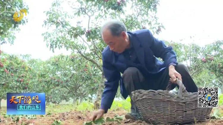 青州:助力脱贫攻坚 爱心收购解农忧