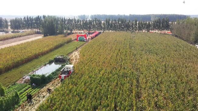 潍坊全市秋收秋种工作基本结束 冬小麦播种面积突破459万亩