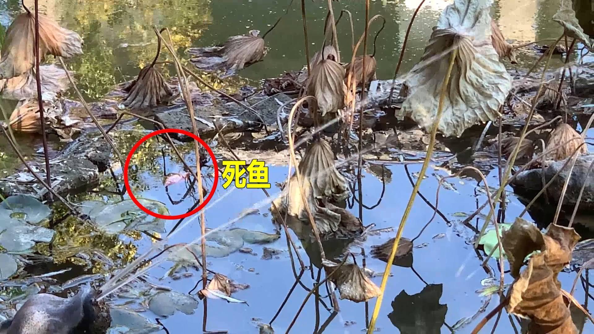 问政山东|国家级文保单位十笏园水池布满蚊蝇幼虫还漂着死鱼 工作人员称:一直在换水