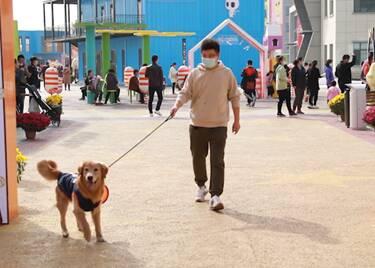 45秒|首届中国(聊城)萌宠文化节举行!全省首家宠物小镇开街
