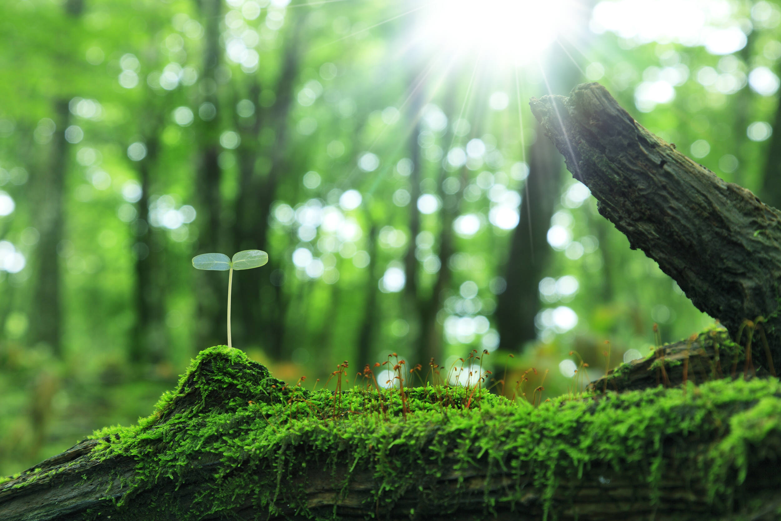 闪电评论 在幼小的心灵中播撒保护生态环境的种子
