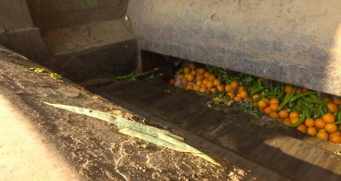24秒丨所有食用农产品品类检测全覆盖!日照东港区集中销毁农检超标产品