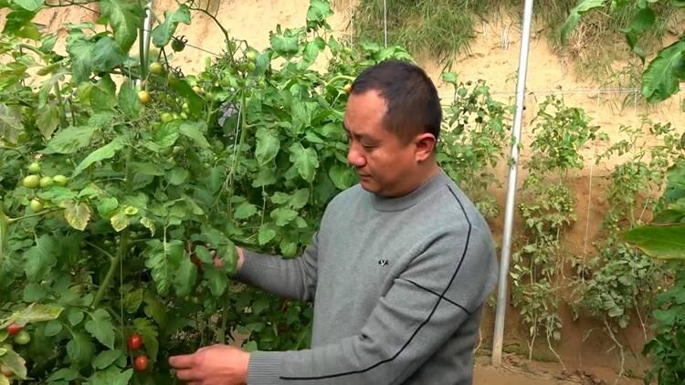 87秒|废弃瓜菜秧还能就地变肥料?!聊城莘县这1200亩蔬菜大棚做到了