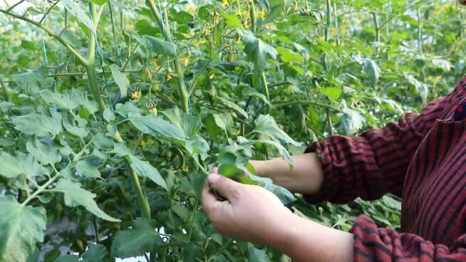 44秒丨新建温室大棚85个 东营利津工业化理念发展现代农业
