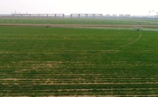 """潍坊24小时平均降水量36.8毫米 """"及时雨""""有效改善土壤墒情"""