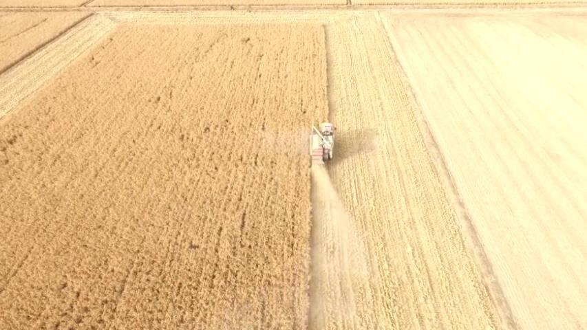 53秒丨稻花香里说丰年 滨州高新区1500亩水稻喜获丰收