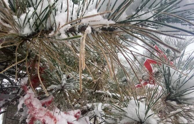 下雪啦!临沂蒙山迎来2020入冬第一场雪 银装素裹宛如仙境