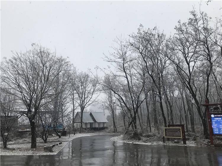 组图|潍坊迎来今冬首场降雪 青州仰天山银装素裹