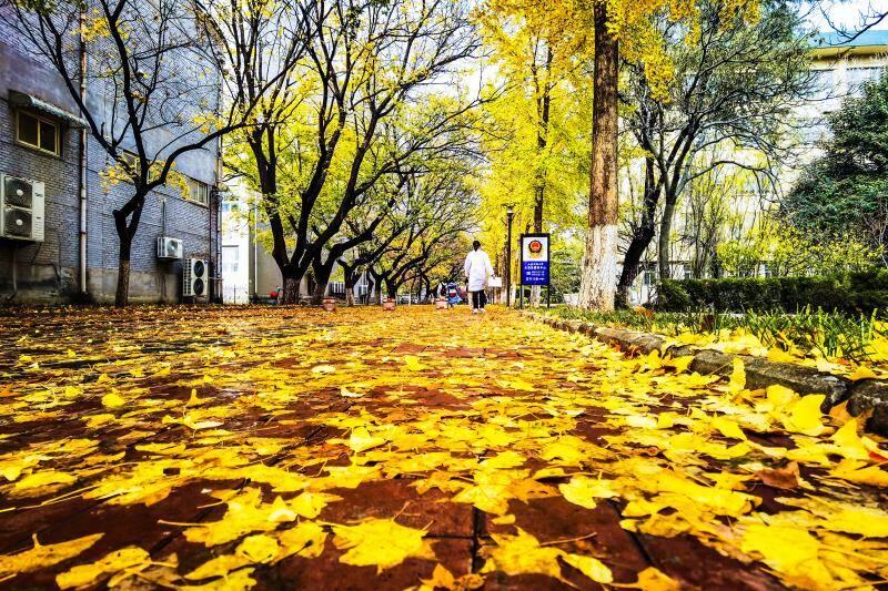 影像力|山师校园里的落叶季,随便一拍就是你喜欢的样子