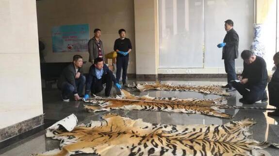 28秒丨虎皮、象牙、狮骨!日照警方侦破一特大濒危野生动物制品案