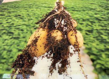闪电述评丨创新引才家国情,解锁德州小土豆的三个创富密码