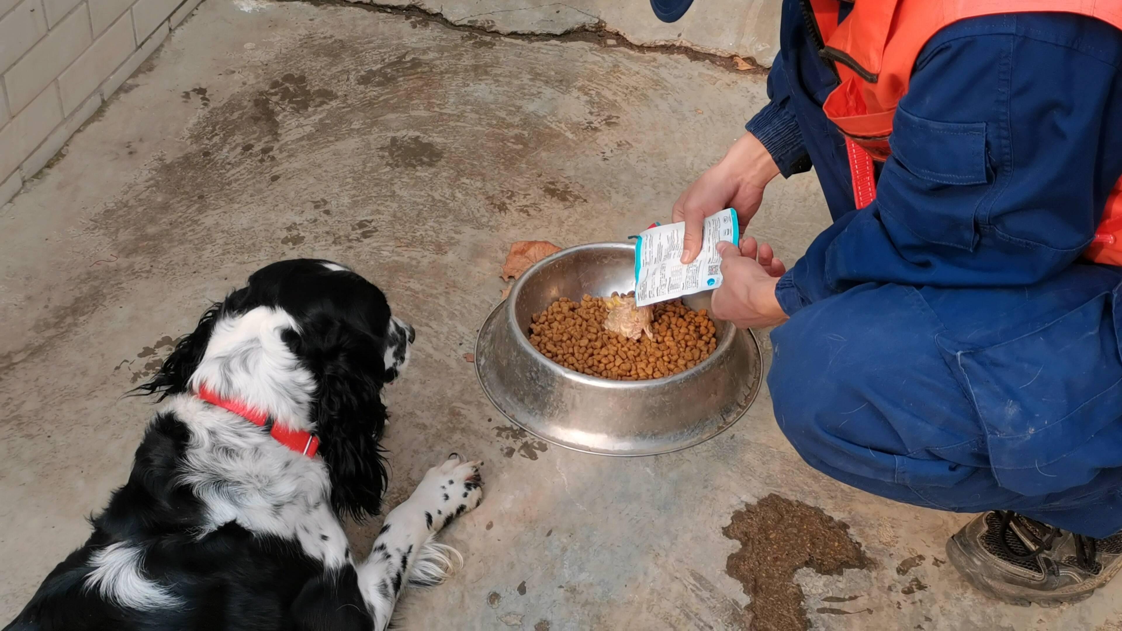 狗子会说话了!快来看看如何成为一只合格的搜救犬