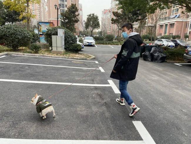 99秒 | 青岛一小区全面禁止养犬引争议 物业回应:将调整寻找合适方案