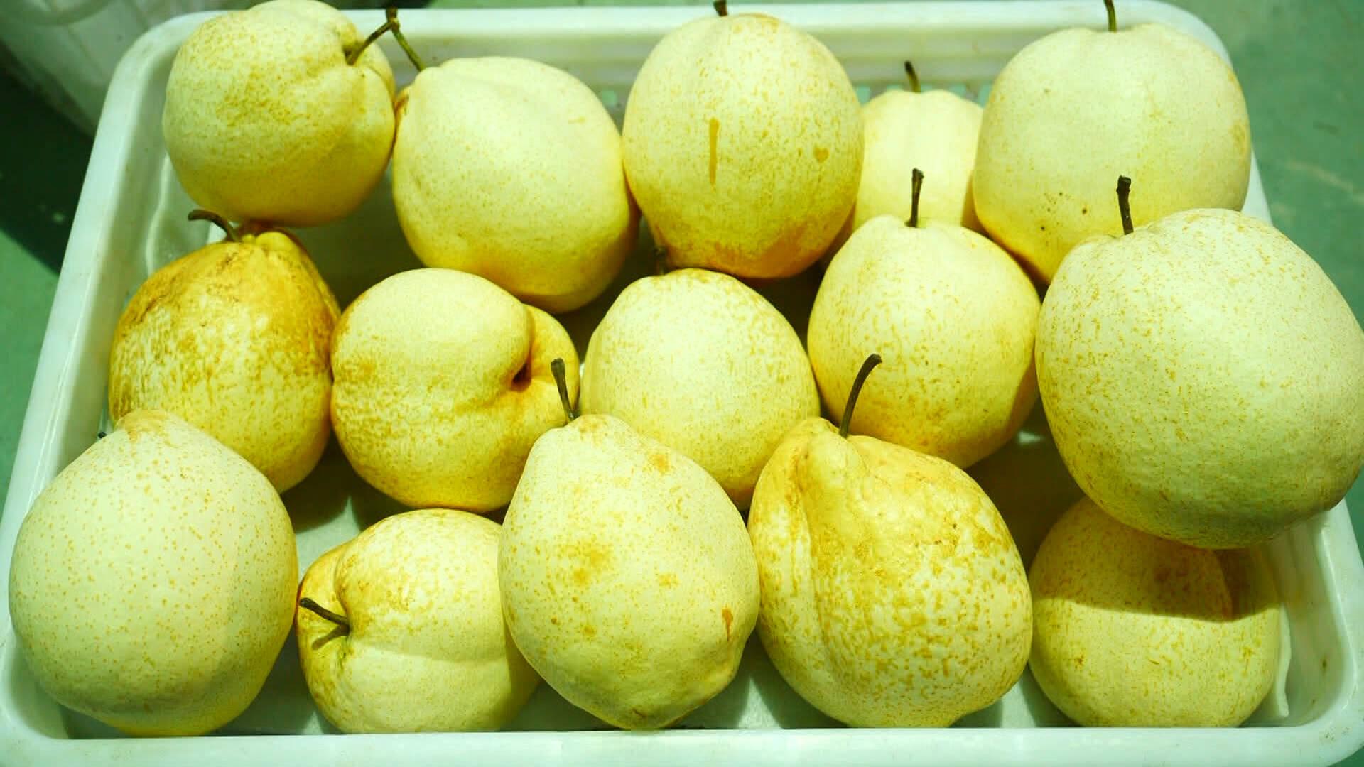 """历时15年培育新品种!这个被鸟儿""""选中""""的梨一颗能卖50元"""