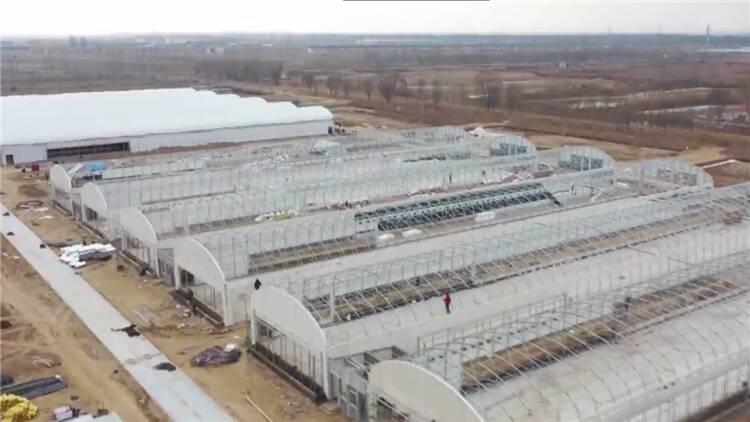 89秒丨利津建成东营最大规模肉鸭养殖场 鸭子住楼房还有智能保姆