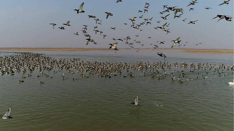 冰面漫步、水中追逐…62秒航拍带你看黄河口珍惜鸟类的欢闹场面