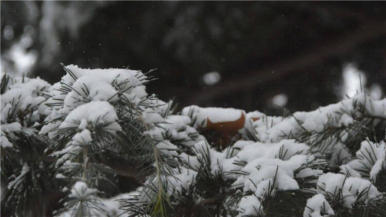 57秒|镜头记录风雪中的潍坊:外卖小哥放慢了速度 市民加入扫雪