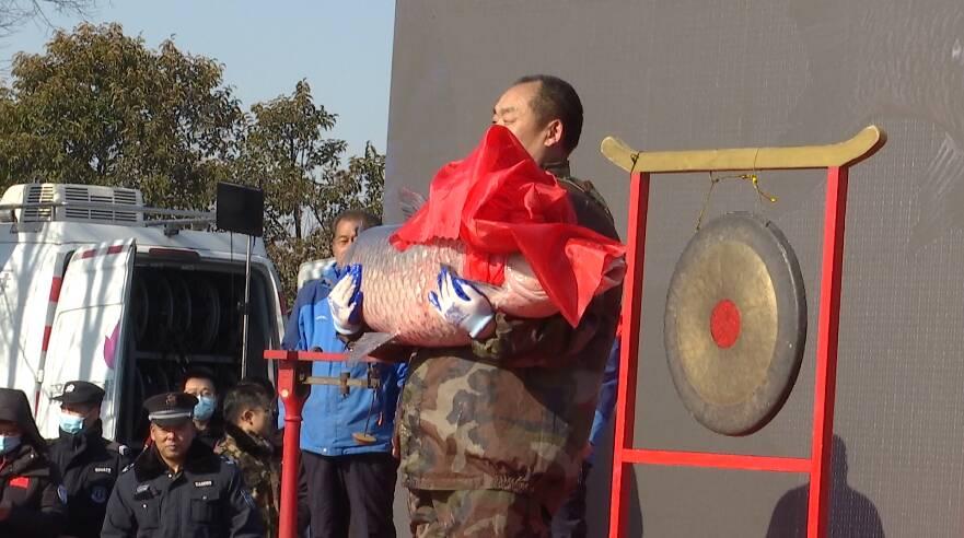 50秒丨济宁太白湖冬季捕鱼节开启 头鱼85斤6两再创新纪录