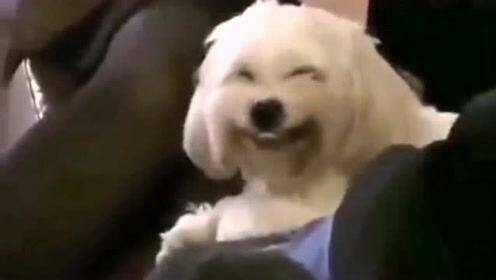 济南拟出台养犬新规:不清犬粪罚五百、遗弃犬只罚两千,两年罚三次以上没收犬只