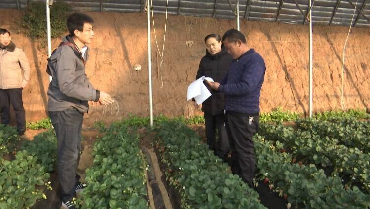 35秒|安丘市成立6个农业防寒潮包靠工作组田间支招保生产