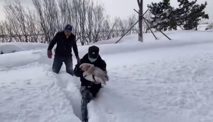 43秒丨大天鹅受伤趴在雪地上奄奄一息,威海公安海岸警察紧急救助